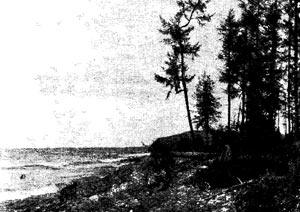 Наступающий береговой вал близ устья р. Яксакан (восточное побережье северного Байкала).
